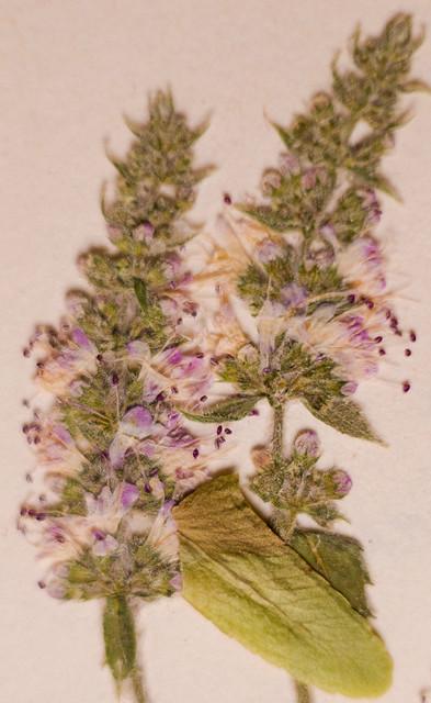 Herbario I