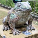 Mosaic Toad