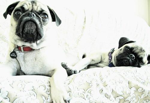 Otis and Babe   by j.arsenault
