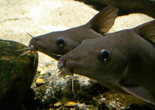 catfish friends 4ever   by i eated a cookie