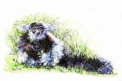 Postcards for the Lunch bag - B&W Ruffled Lemur