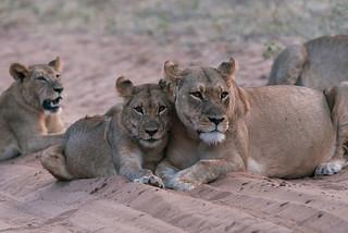 Wild Botswana | by knipslog.de
