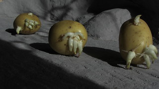 An Alien Spud/Potato Diorama The Moon Surface - 2 Of 18   by Kelvin64