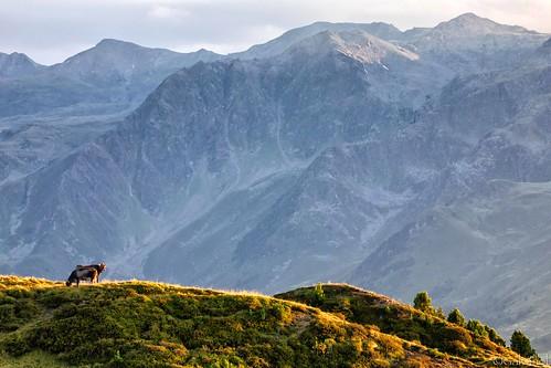 axams landscape olivergalvan alpine alpsintyrol austria eveningmood alpinepasture evening stubaialps light salfeins golden tyrol senderstal green sunset galvanol sundown mountains