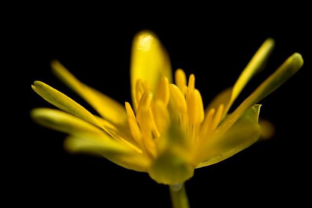 Giallo, semplicemente giallo