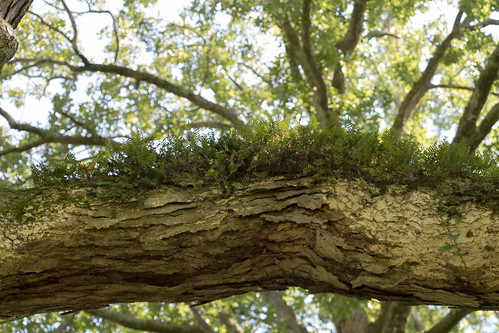 cherokee fungi redclaystatepark tennessee cleveland unitedstates us