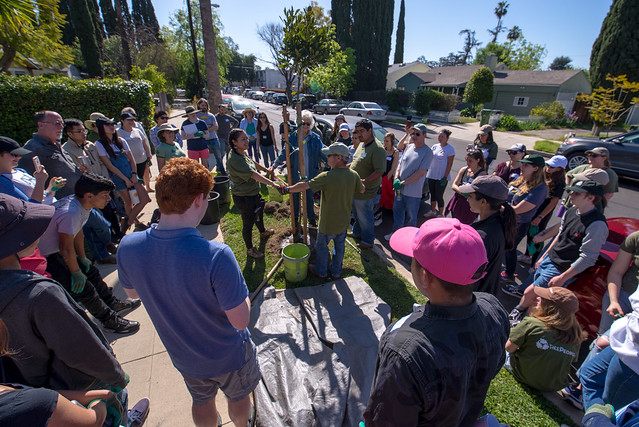 Van Nuys Citizen Forester Planting