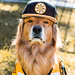 oshie bruins2 (1 of 1)