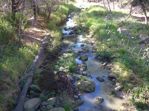 wetlands queensland berrinba berrinbawetlands