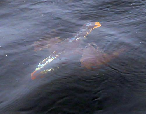 Puffin submarine