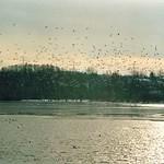Der Ümminger See im Winter