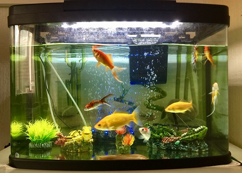 My nice fish tank | by Peter Singhatey