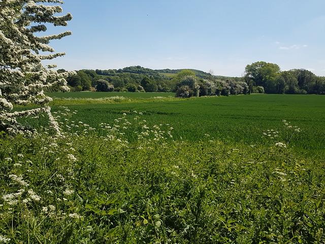 North_Downs_Way_Fields
