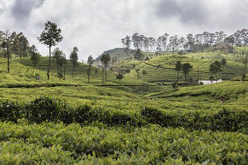 srilanka asia canon haputale dambatenneteaplantation dambatenne teaplantation tea landscape nature clouds mountains