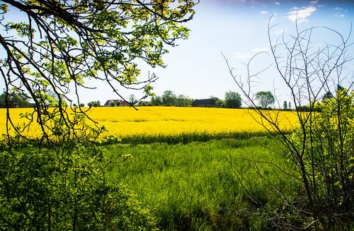 frame countryside fs180520 skåne landscape rapeseedfield landskap fotosondag foto outdoor malmö rapeseed oxie field skånelän sverige se grass tree sky rapsfält raps