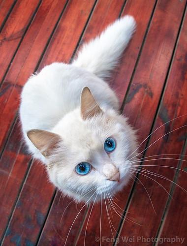 curious outdoors cat asia travel cute zhejiangprovince vertical feline colorimage highangleview hangzhou curiousity chinaeastasia zhejiang china cn