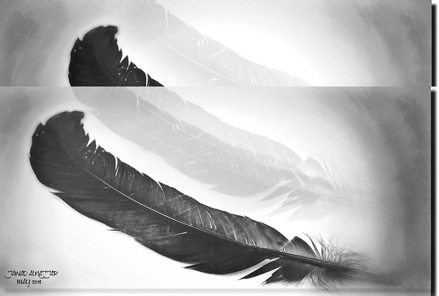 FEATHER IN BLAK & WHITE-II22