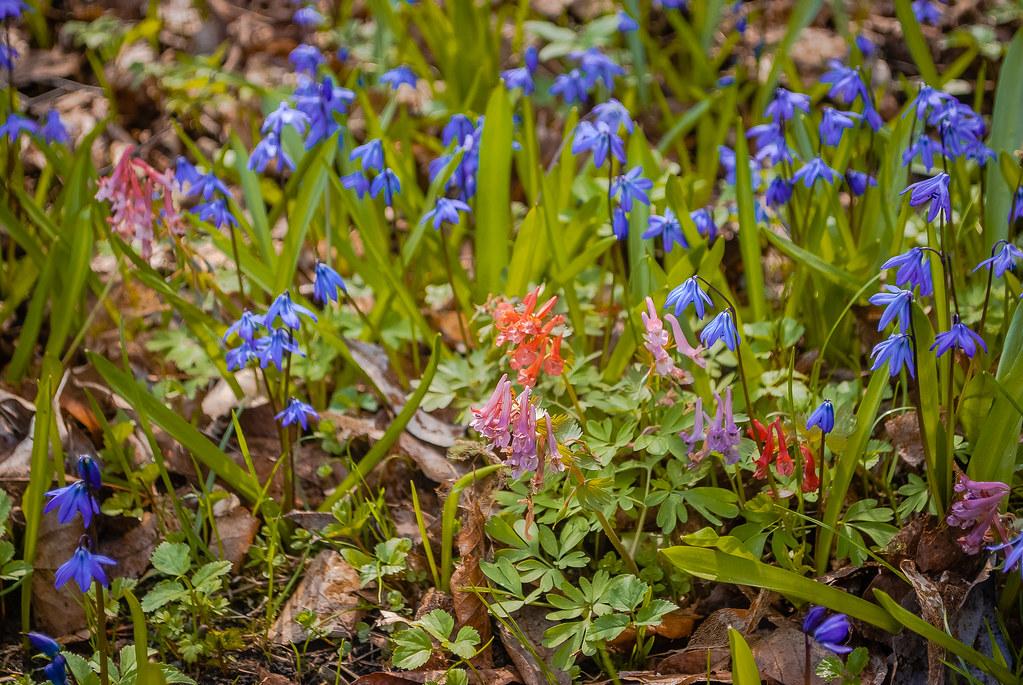 Весеннее разноцветье...... DSC_7614
