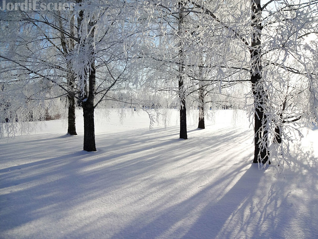 Winter Lush