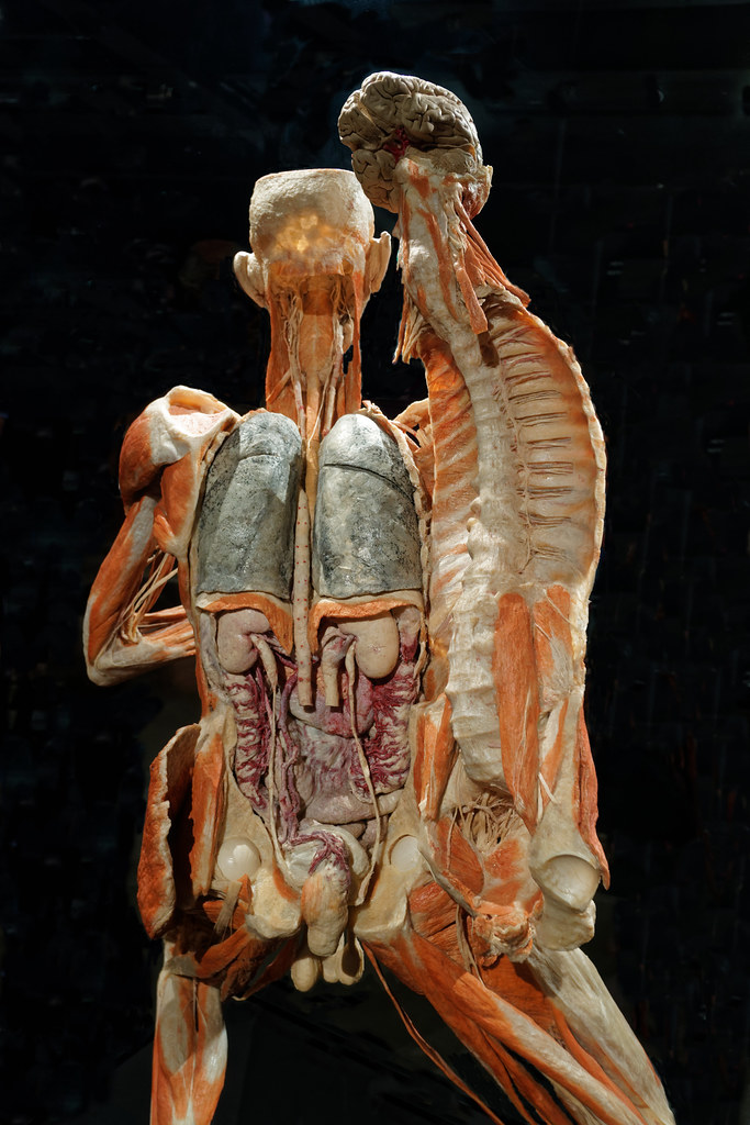 Body Worlds The Happiness Project Amsterdam Gunther Von Flickr