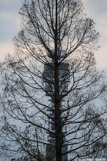 TV Tree