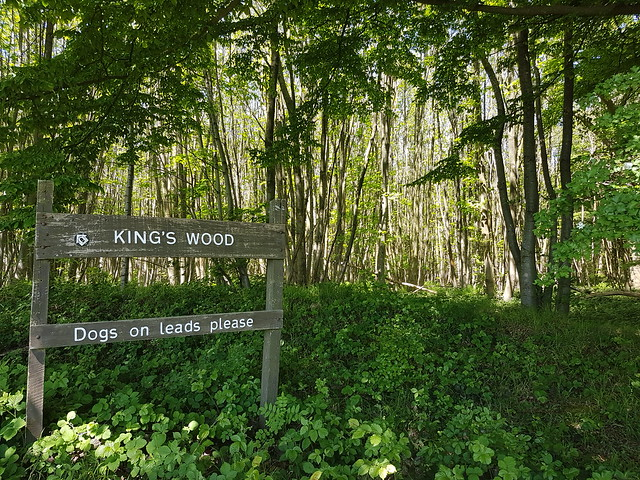 King's_Wood_NDW
