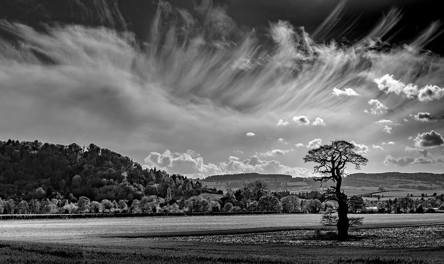 Lone Tree, Symonds Yat