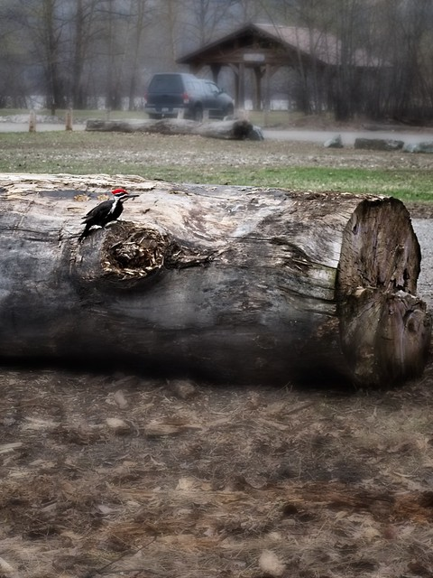 Cottonwood Island Park_06