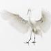 Landing Egret... by Daniel Parent
