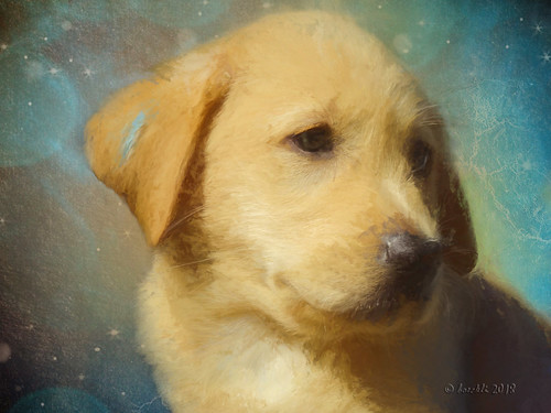 textures texturen texture textur temari09 dog dogs hund hunde animal animals tiere topaz topazimpression2 outdoor guidedogs australia newsouthwales painterly painting