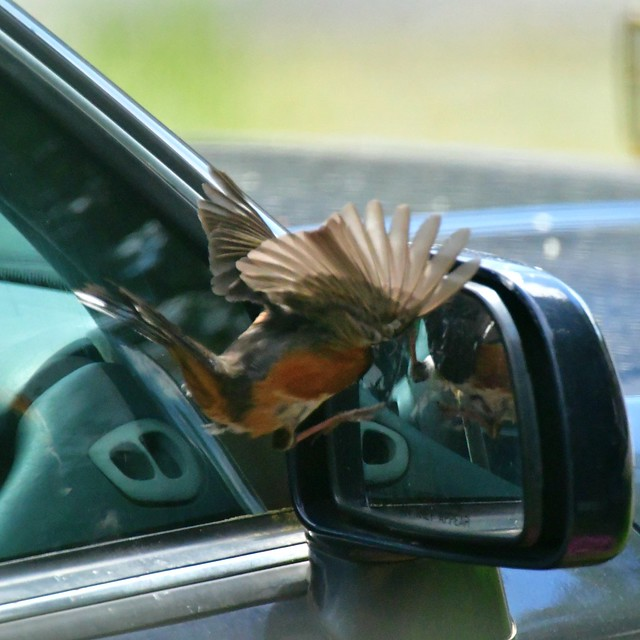 objects in mirror are closer than they appear . . .