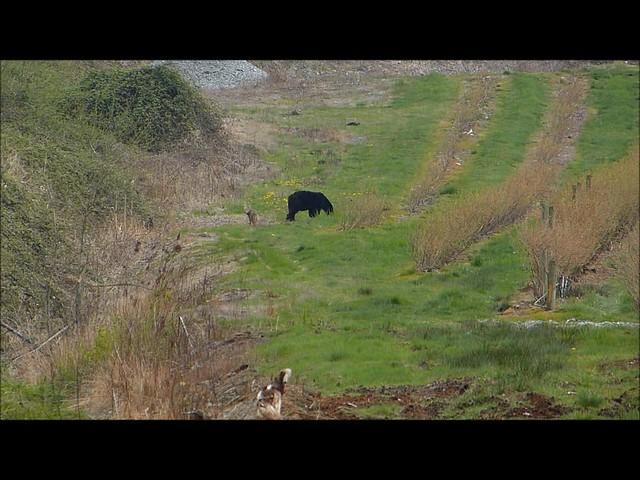 Don't Poke A Bear!!