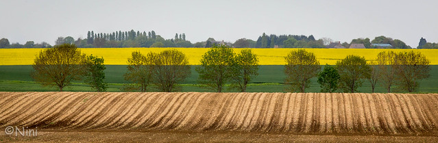 Fields of rapeseed - central of France