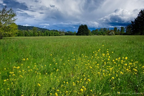 green field grass flowers weeds trees sky clouds sunshine springfield oregon spring fujifilm xt2