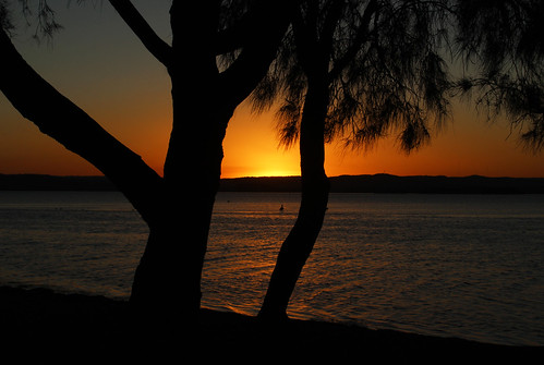 theentrance centralcoast nsw australia picnicpointreserve tuggerahlake sunset silhoutte pelican
