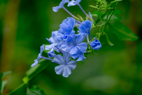 Flowers at Brookside Gardens | by John Brighenti