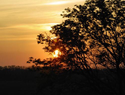 jrneziolphotography portrait sunset sunshine sunlight landscape brantford beautiful bright tree trees outdoor nikon nikoncamera nature nikondslr nikond80 naturallight evening photography sky dusk