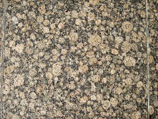 Baltic Brown Granite (rapakivi granite) (wiborgite) (Wiborg Batholith, 1.615-1.645 Ga, Paleoproterozoic; Husu Quarry, Kymi Province, Finland) 9