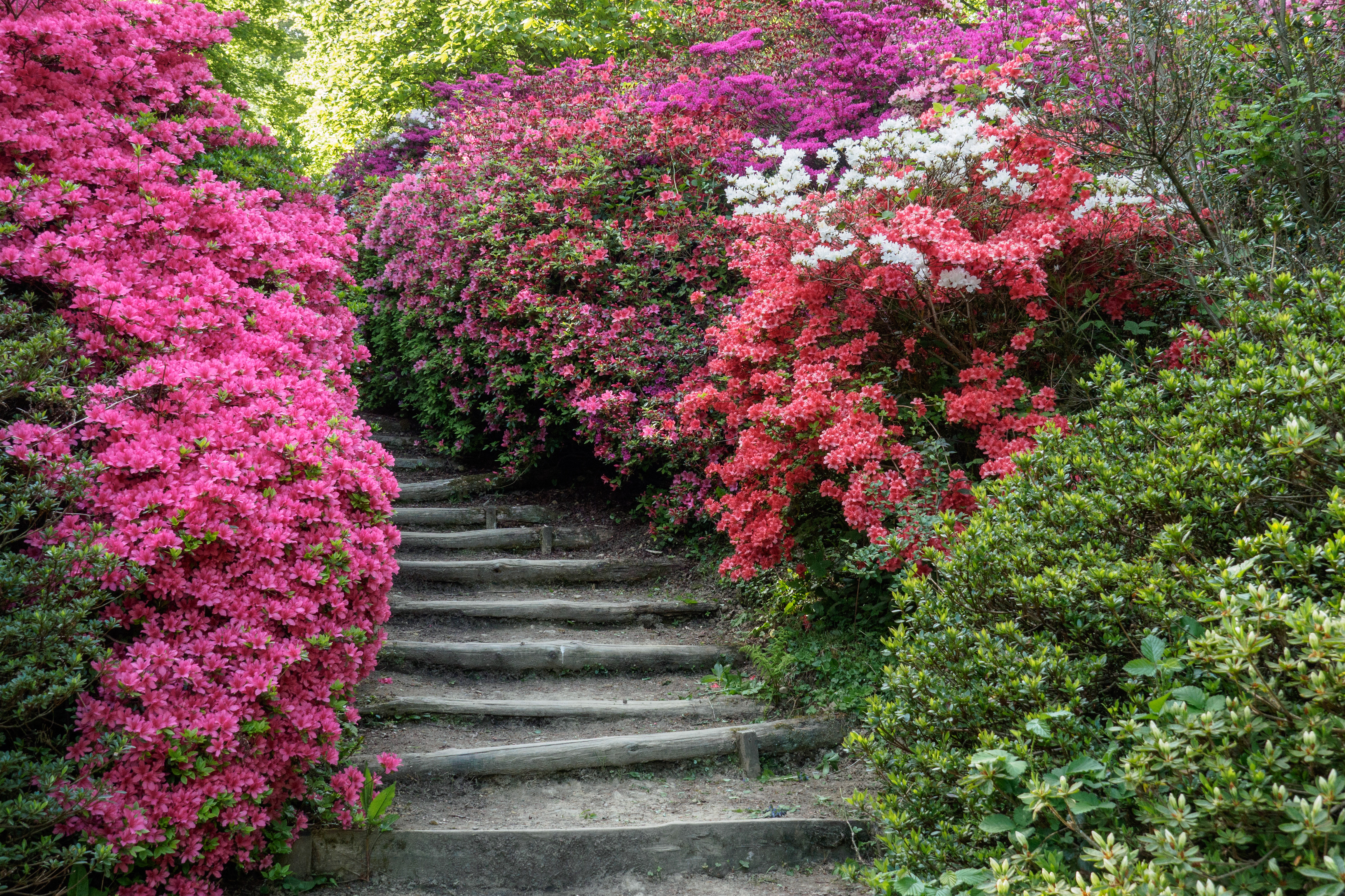Spring at Winkworth-E5090227