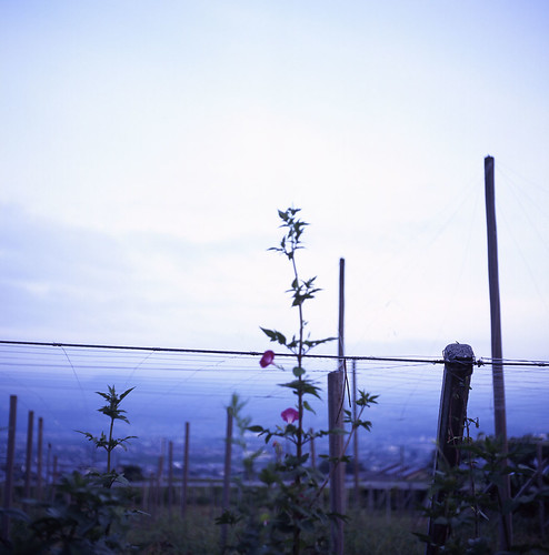 Kofu basin: Fuji ver. | by nino**