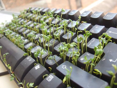 Keyboard and Cress   by wetwebwork