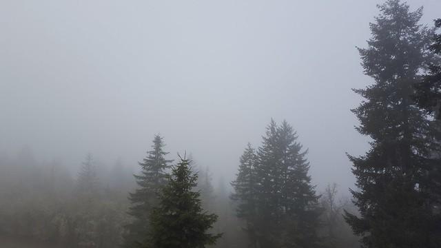 Foggy Firs