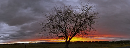 sunset tree richmond lowlands storm cloud 7d silhouette pano panorama 1022