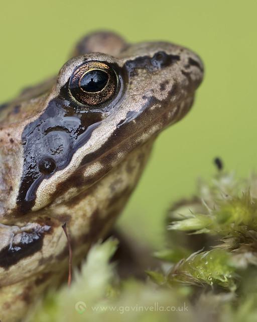 Frog Eye 28th April