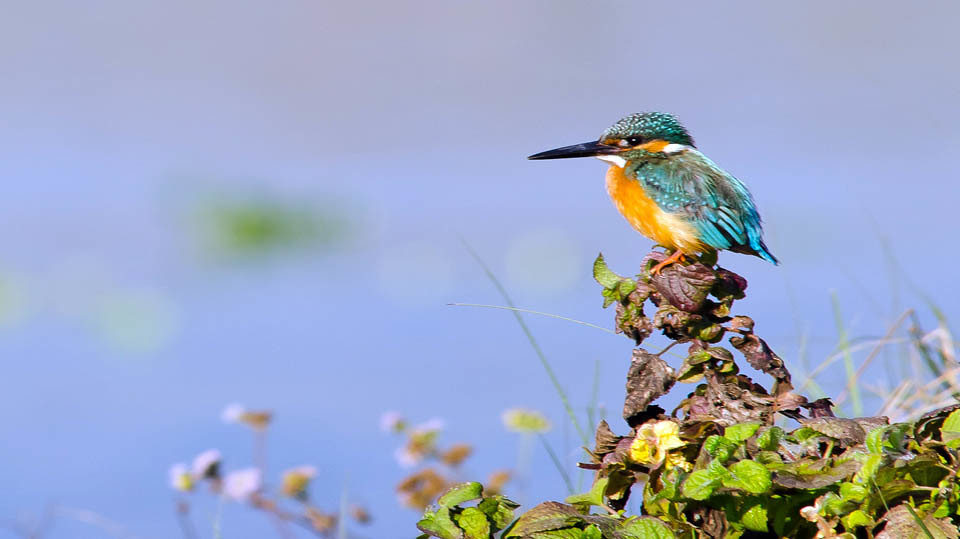 Bird watching in Nepal,