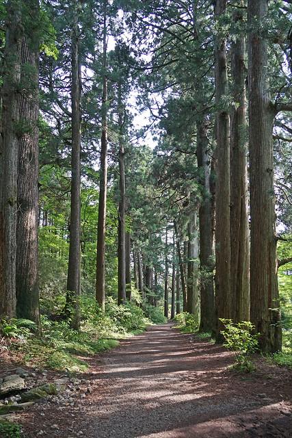 L'ancienne route Tokaïdo (Hakone, Japon)
