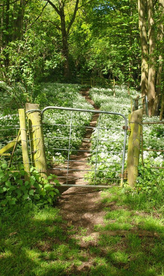 Malvern_wildflowers_gate