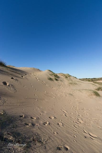 Dutch Sahara?