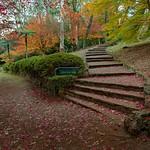 Laburnum Steps Revisited