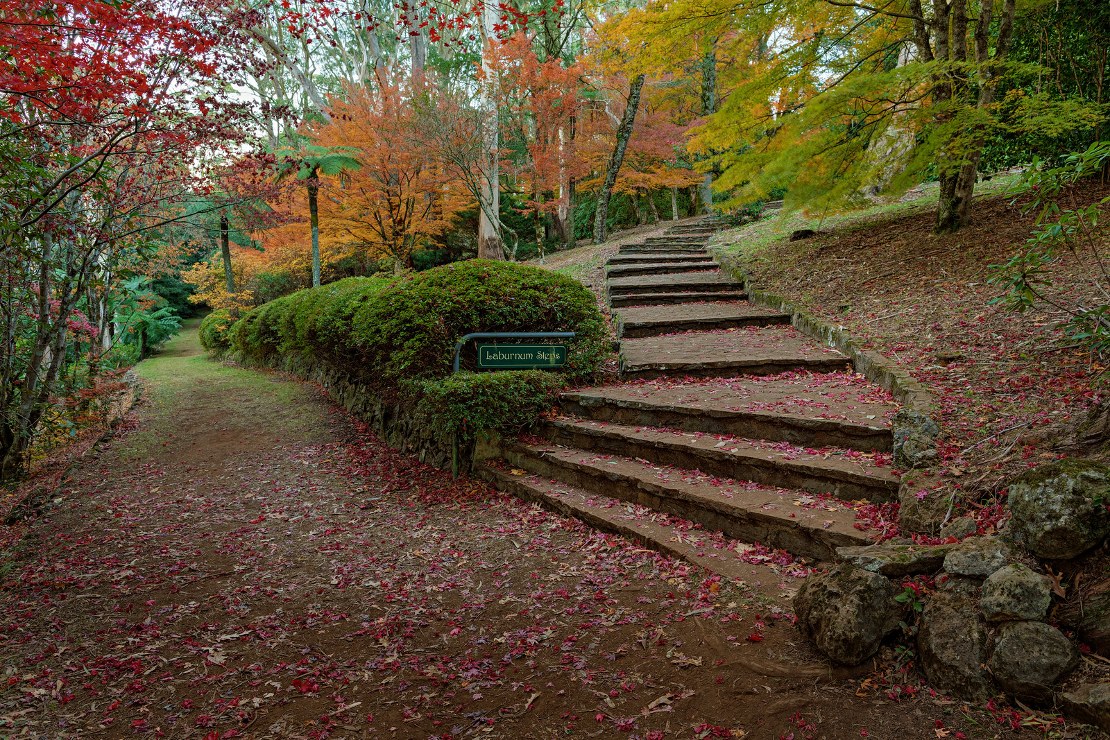 Laburnum Steps Revisited